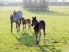 spring-mare-and-foals